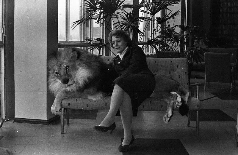 Дрессировщица Ирина Бугримова со львом. Семен Мишин-Моргенштерн, 1962 - 1965 год, МАММ/МДФ.