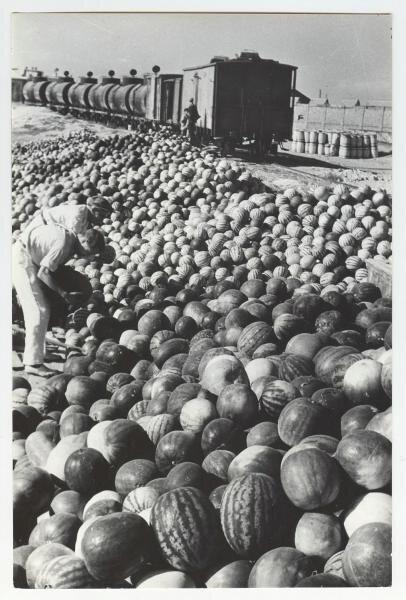 Арбузы Кубани. Борис Игнатович, 1932 год, Кубань, МАММ/МДФ.