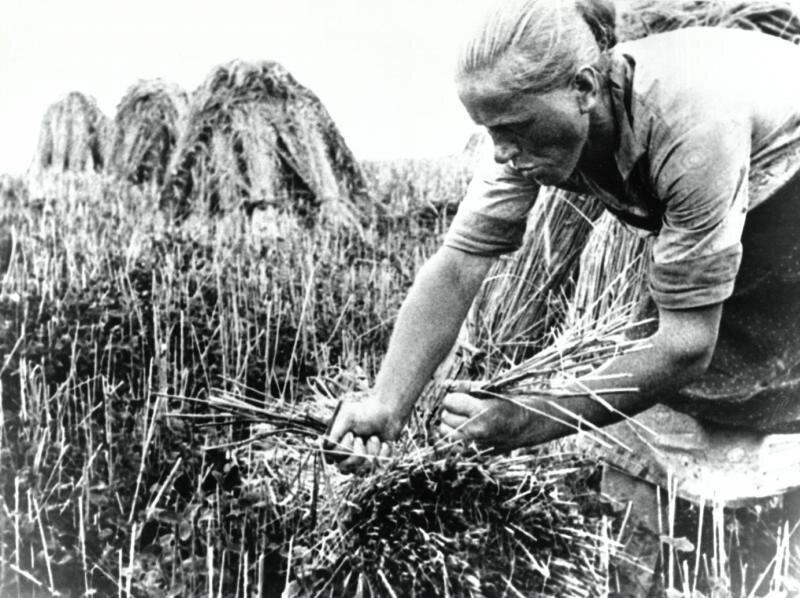 Жница. Аркадий Шишкин, 1929 год, Московская обл., Звенигородский р-н, МАММ/МДФ.