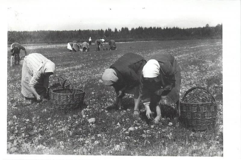 Сбор урожая. Леонид Шокин, 1930-е, Калининская обл., г. Кимры, МАММ/МДФ.