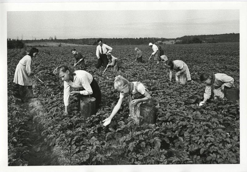 «Звено высоких урожаев». Сергей Васин, 1948 год, МАММ/МДФ.