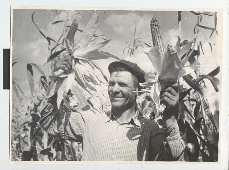 Уборка кукурузы. Комбайнер В. Я. Первицкий. Виктор Темин, 1960 - 1963 год, Краснодарский край, МАММ/МДФ.