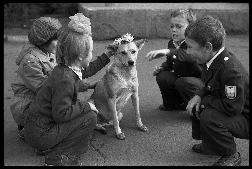 «Венок для собаки в День Знаний». Школа № 8. Владимир Соколаев, 1 сентября 1983 года, г. Новокузнецк, МАММ/МДФ.