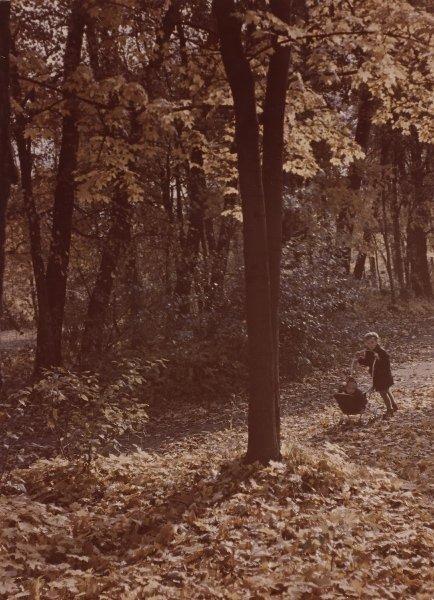 Осень в Останкино. Иван Шагин, 1960 - 1979 год, г. Москва, МАММ/МДФ.