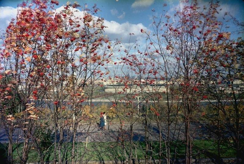 Большая спортивная арена в Лужниках осенью. Иван Шагин, 1960-е, г. Москва, Воробьевская наб., МАММ/МДФ.